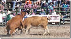 Bruneau Rodeo 480