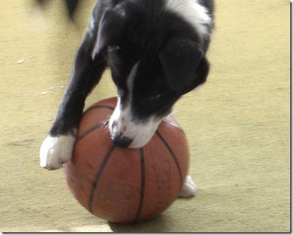 basketbal 013