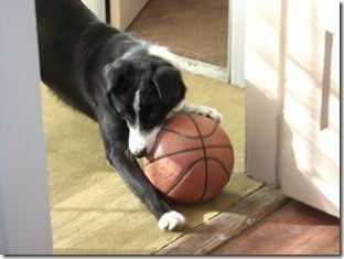 basketbal 003