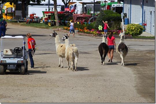 Autumn & Mule Show 582