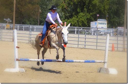 Autumn & Mule Show 897