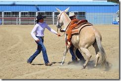 Autumn & Mule Show 1025