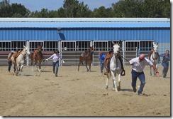 Autumn & Mule Show 1051