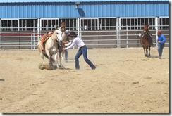Autumn &amp; Mule Show 1057