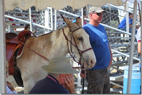 Autumn &amp; Mule Show 1073