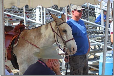 Autumn & Mule Show 1073