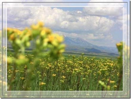 flower field 2