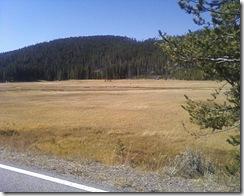 Meadow4