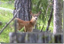 Ardie in Cascade 057
