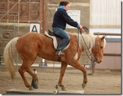 Lessons & Horse retirement 365