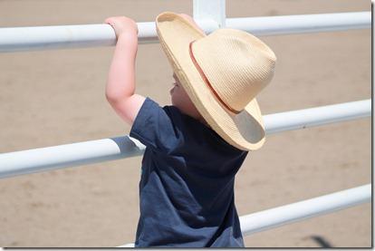 Open Horse Show 252