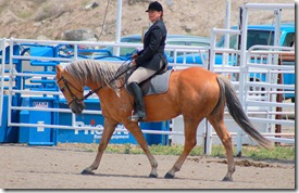 Open Horse Show 332