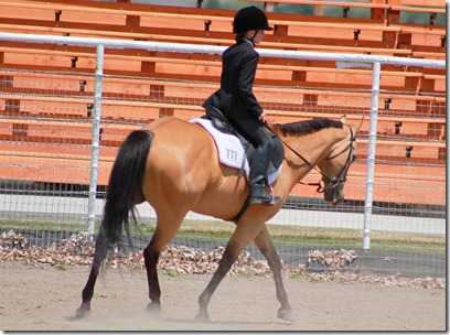 Open Horse Show 342