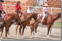 Open Horse Show 1177
