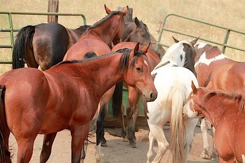 many horses.jpeg