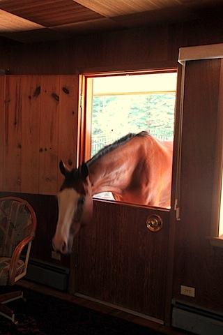 Jessie's Dorky Horses (14).JPG