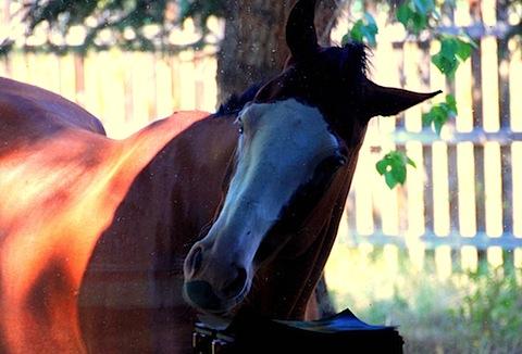 Jessie's Dorky Horses (1).JPG